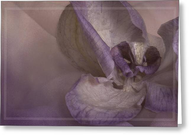 Dried Orchid Greeting Card by Cindy Rubin