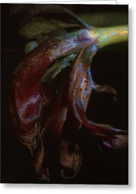 Dried Petals Greeting Card by Cindy Rubin