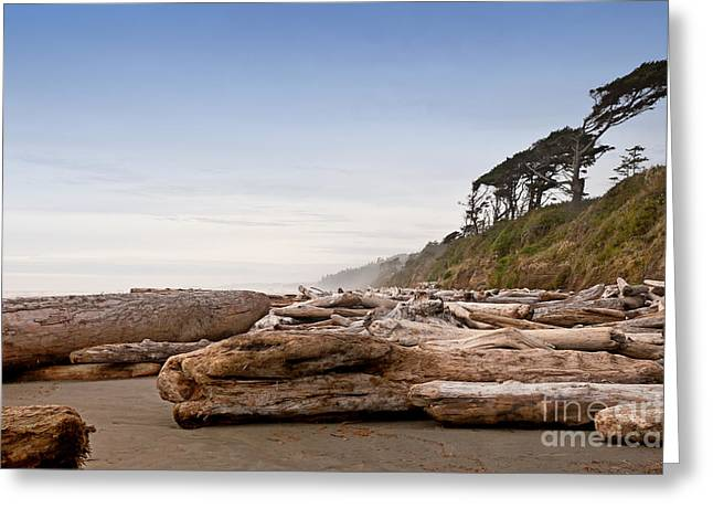 Drift Logs Tossed Like Pick-up Sticks Upon Pacific Coast Beach Greeting Card