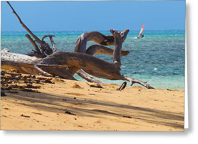 Greeting Card featuring the photograph Drift Wood by Debbie Cundy