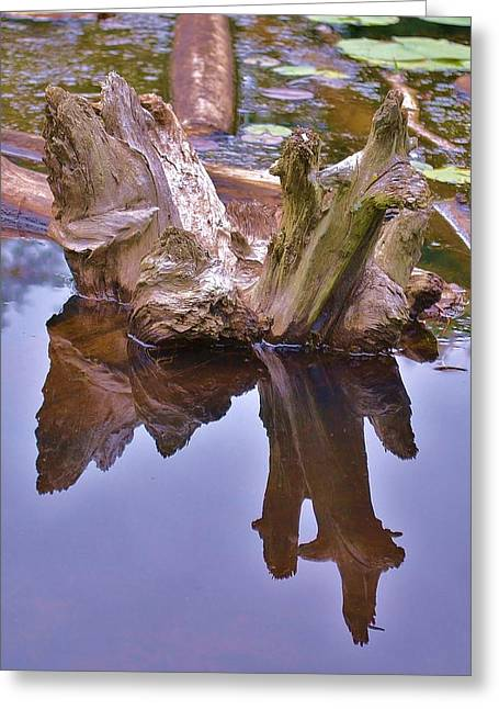 Drifting Reflections Greeting Card by Mary Zeman