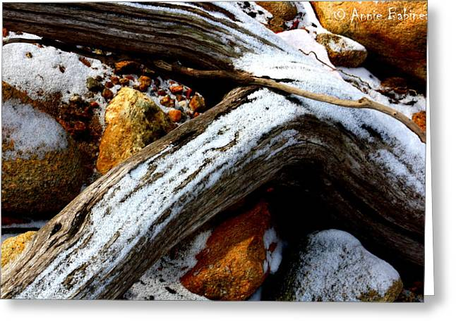 Driftwood  Greeting Card by Anne Babineau