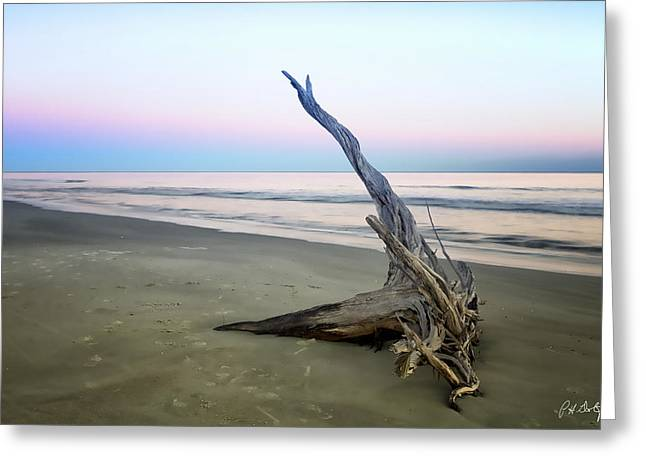 Driftwood At Dusk Greeting Card by Phill Doherty