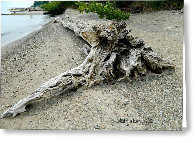 Driftwood At Lake Erie Greeting Card by Kathy Barney