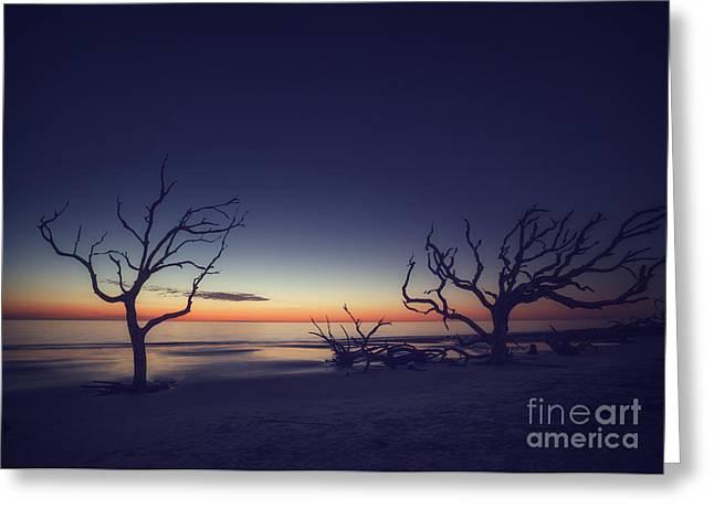 Driftwood Beach 2 Greeting Card