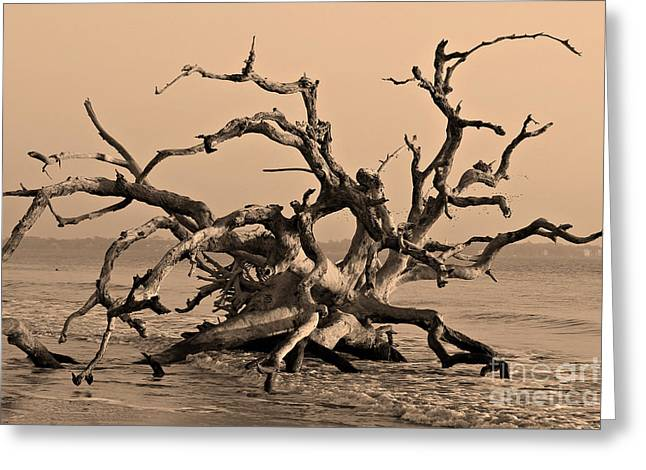 Driftwood Beach Jekyll Island Greeting Card by Leslie Kirk