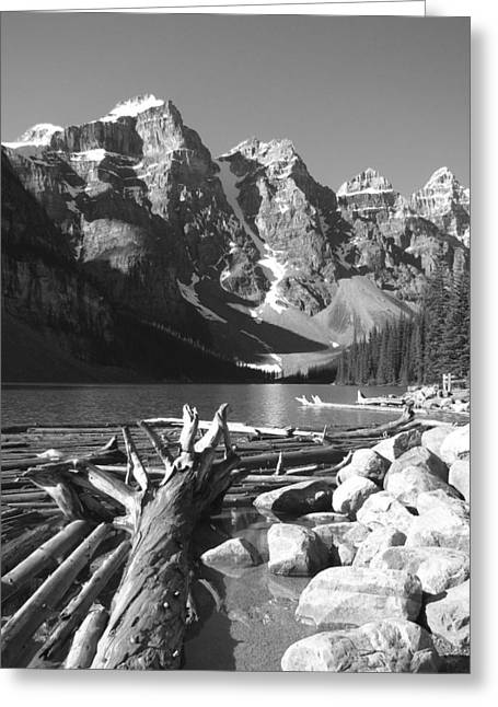 Driftwood - Black And White Greeting Card