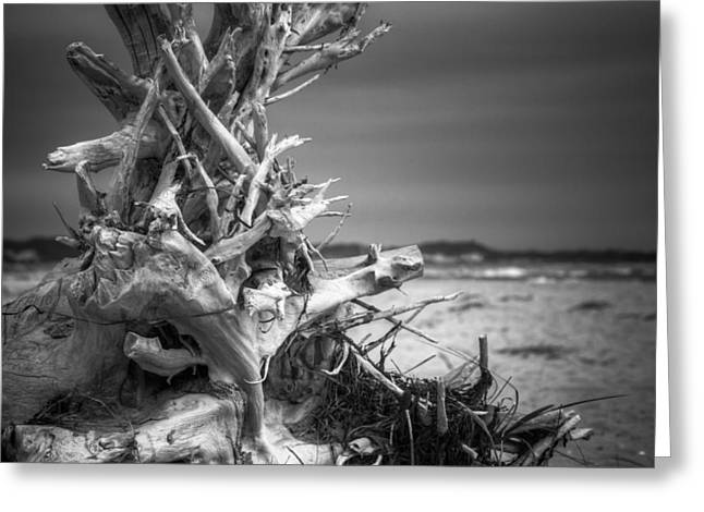 Driftwood At Race Point Greeting Card by Brian Caldwell