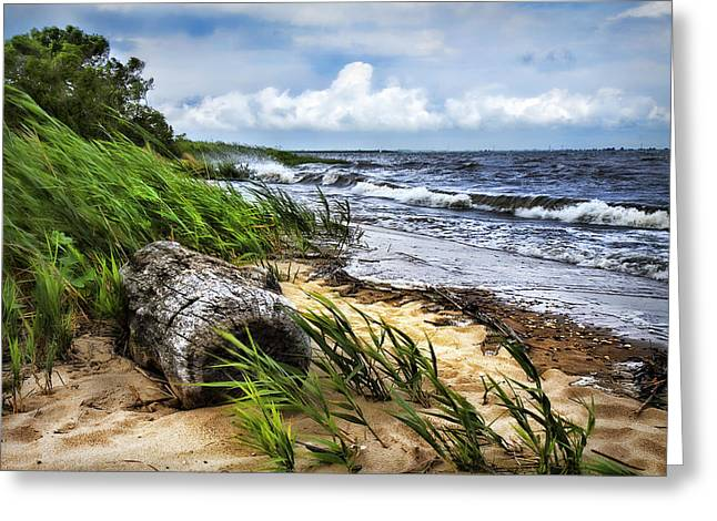Driftwood By The Sea Greeting Card by Trudy Wilkerson