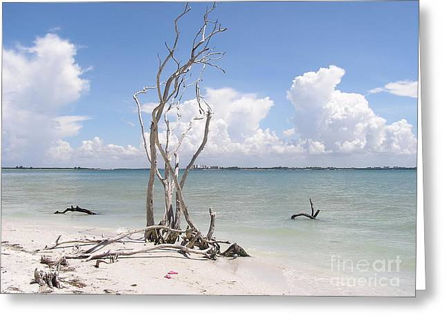 Greeting Card featuring the photograph Driftwood by Carol  Bradley