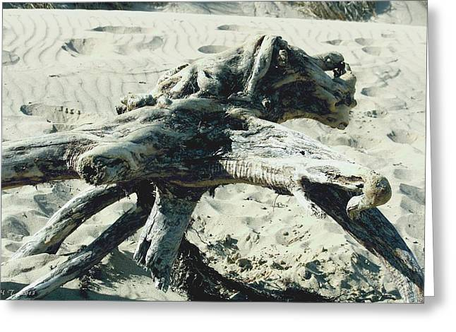 Greeting Card featuring the photograph Driftwood Creature II by Amanda Holmes Tzafrir