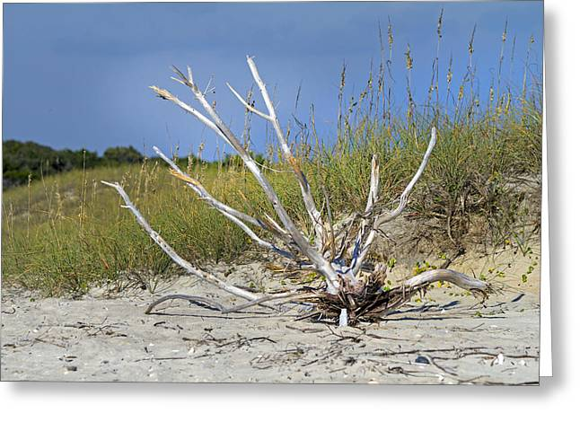 Driftwood Greeting Card by Betsy Knapp