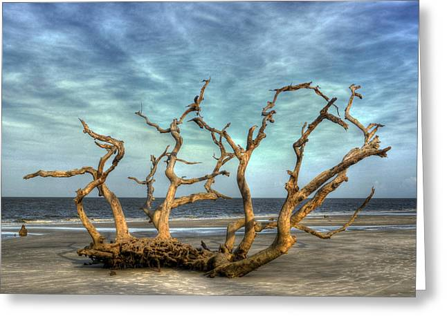 Driftwood Grove Greeting Card by Greg and Chrystal Mimbs