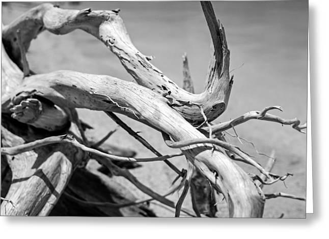 Driftwood Greeting Card by Jonathan Gewirtz