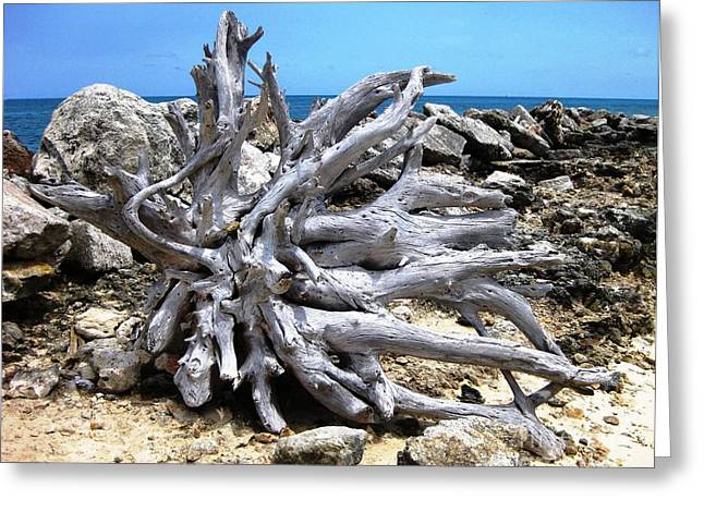Greeting Card featuring the photograph Driftwood by Judy Palkimas