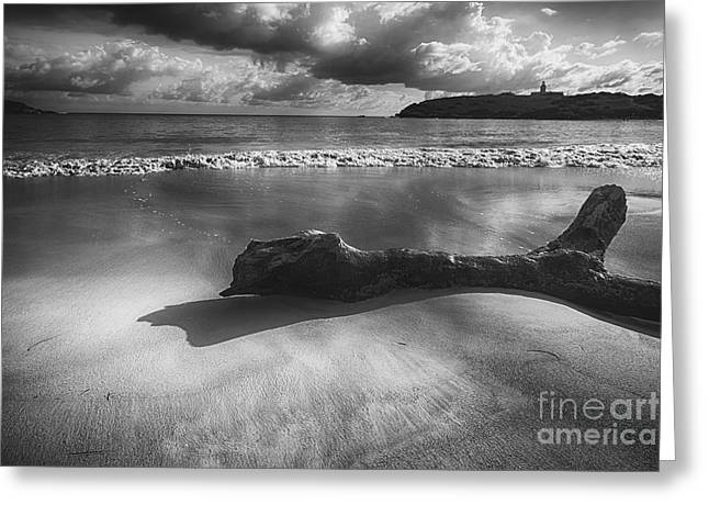 Driftwood On A  Beach Greeting Card by George Oze