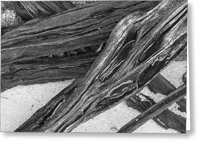 Driftwood On A Beach Greeting Card by Tim Grams