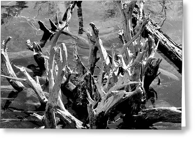Driftwood On Lost Lake Greeting Card
