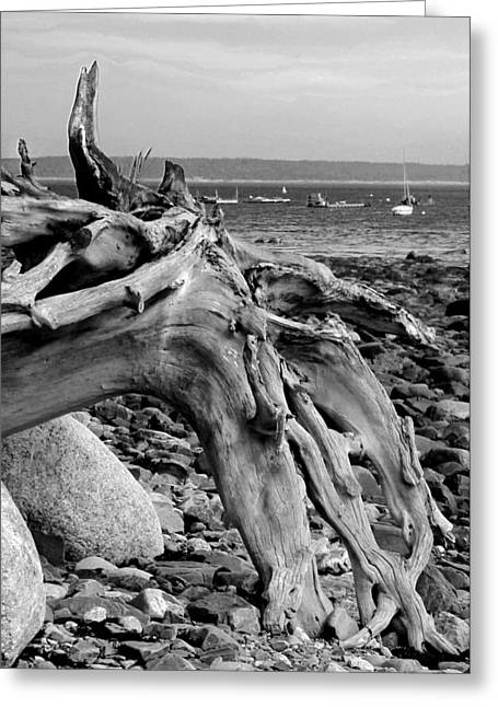 Driftwood On Rocky Beach Greeting Card