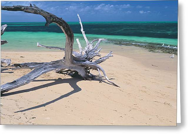 Driftwood On The Beach, Green Island Greeting Card