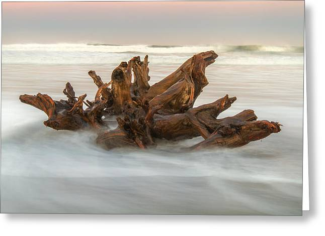 Greeting Card featuring the photograph Driftwood by Randy Wood