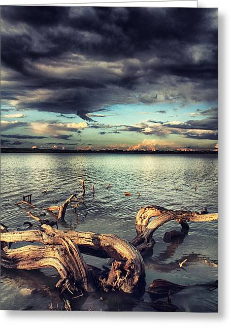 Driftwood Greeting Card by Stelios Kleanthous
