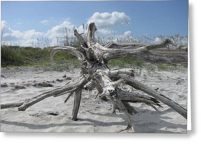 Driftwood Tree Greeting Card