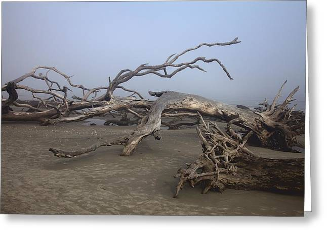 Driftwood Trees On Jekyll Island Greeting Card
