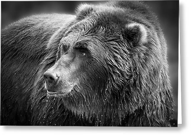 Drinking Grizzly Bear Black And White Greeting Card