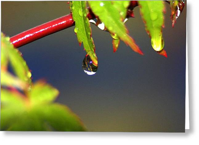 Drip Drop Greeting Card by Rachelle Johnston
