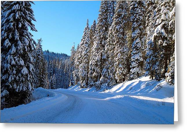 Driving Through The Trees Greeting Card by Lynn Hopwood