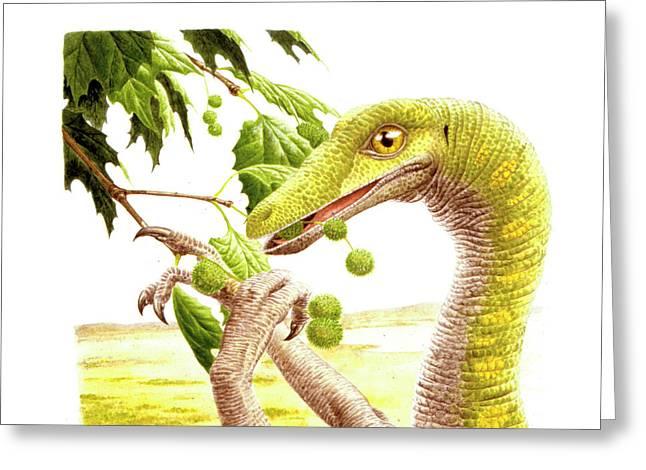 Dromiceiomimus Dinosaur Greeting Card