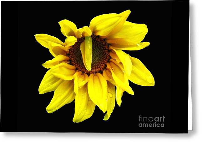Greeting Card featuring the photograph Droops Sunflower With Oil Painting Effect by Rose Santuci-Sofranko