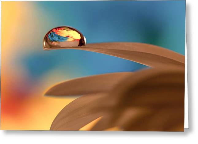 Drop Of Life Greeting Card by Aaron Aldrich