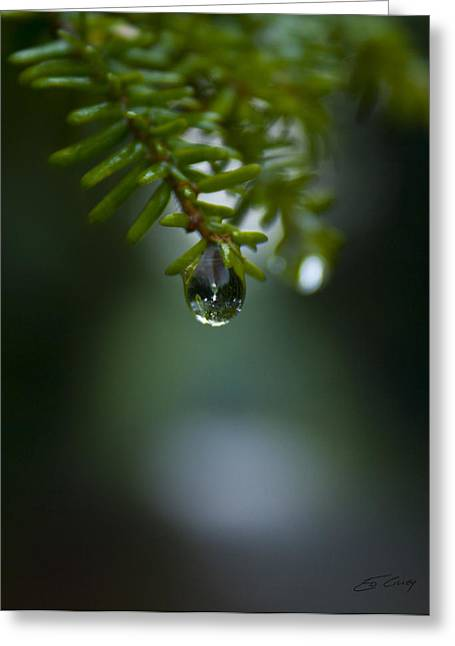 Drop Of Life In The Woods Greeting Card