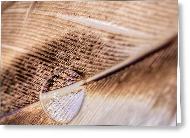 Greeting Card featuring the photograph Droplet On A Quill by Rob Sellers