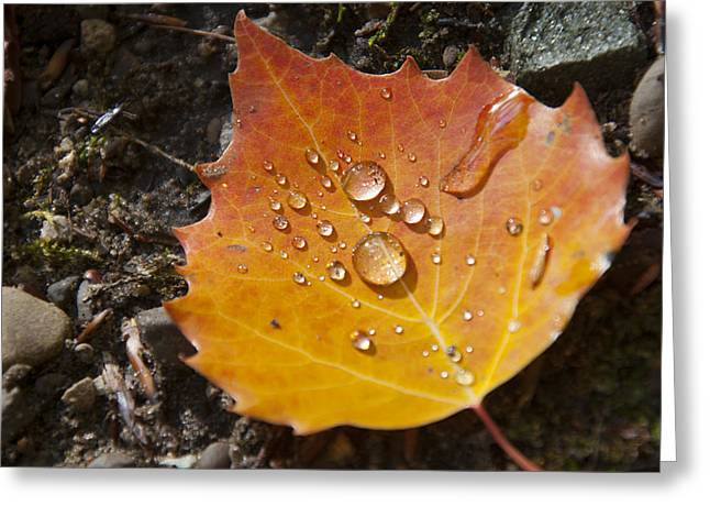 Droplets In Autumn Leaf Greeting Card