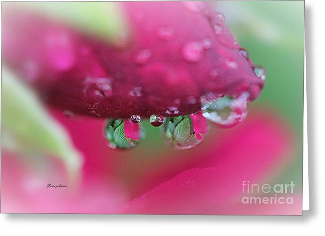 Droplets On The Rose Greeting Card by Yumi Johnson