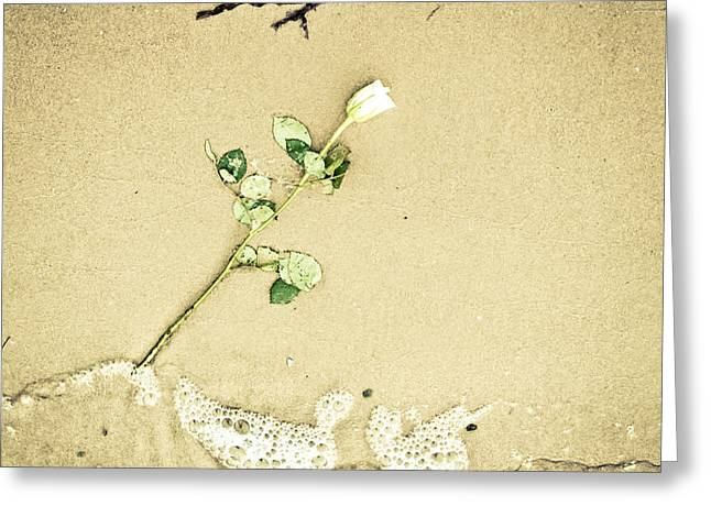 Dropped Flower Greeting Card by Tom Gowanlock