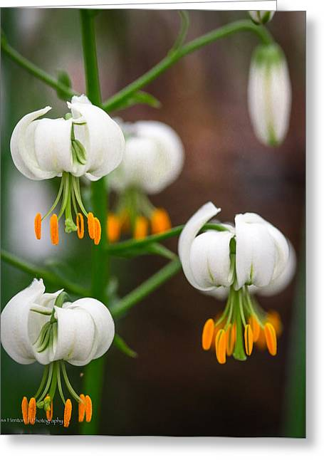 Drops Of Spring Greeting Card by Ross Henton