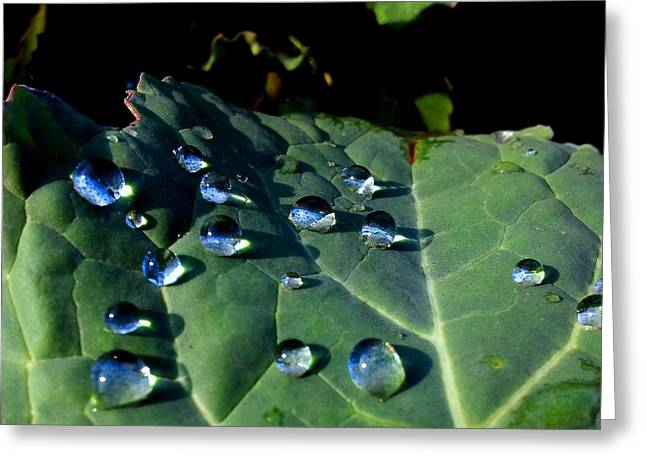 Drops On A Leaf Greeting Card by Claudia Cefali
