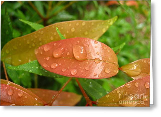 Drops On Leave Greeting Card by Michelle Meenawong