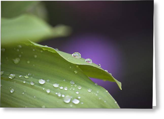 Drops Greeting Card by Thomas Glover