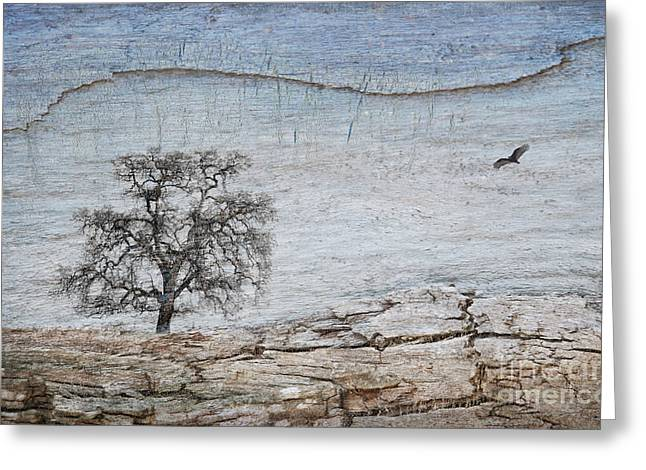 Drought Greeting Card by Alice Cahill