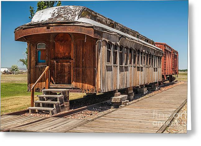 Drover And Cattle Cars Greeting Card