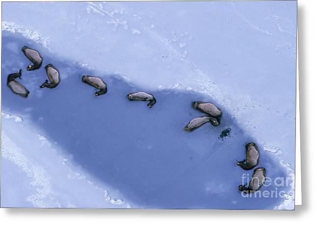 Drowned Elk Greeting Card by William H. Mullins