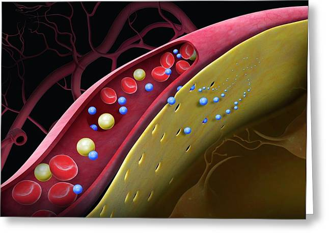 Drug Crossing The Blood-brain Barrier Greeting Card by Claus Lunau/science Photo Library
