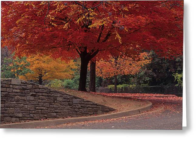 Druid Park-baltimore -- Maryland II Greeting Card by Harold E McCray