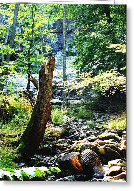 Dry Creek Greeting Card