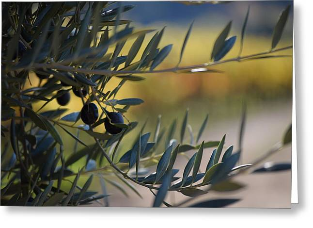 Dry Creek Valley Olives Greeting Card